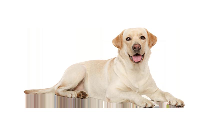 dogtransparent
